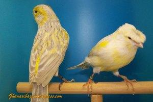 Canary0028913